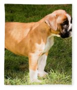 long tailed Boxer Puppy in the sun Fleece Blanket