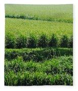 Louisiana Cane Field Fleece Blanket