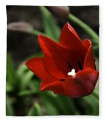 Love Tulip Time Fleece Blanket