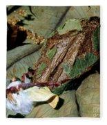 Luna Moth Emerging From Cocoon Fleece Blanket