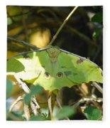 Luna Moth In The Sun Fleece Blanket