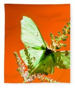 Luna Moth On Astilby Orange Back Ground Fleece Blanket