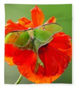 Luna Moth On Poppy Square Format Fleece Blanket