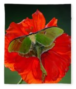 Luna Moth Orange Poppy Green Bg Fleece Blanket