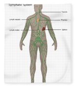 Lymphatic System In Male Anatomy Fleece Blanket
