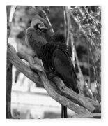 Macaws Of Color B W 15 Fleece Blanket