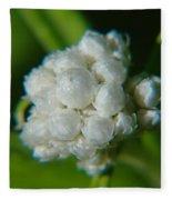 Macro Of A White Bulb Fleece Blanket