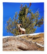 Majestic Big Horn Sheep Fleece Blanket