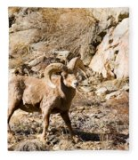 Majestic Bighorn Fleece Blanket