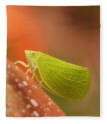 Making Like A Leaf Fleece Blanket