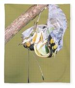Malachite Butterfly Emerging 4 Of 6 Fleece Blanket