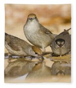 Male And Female Eurasian Blackcaps Fleece Blanket