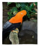 Male Andean Cock-of-the-rock Fleece Blanket