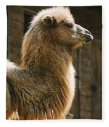 Male Camel Head Fleece Blanket