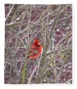 Male Cardinal Cold Day 2 Fleece Blanket