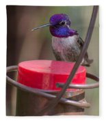 Male Costa Hummingbird Fleece Blanket