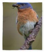 Male Eastern Bluebird With Spider Fleece Blanket
