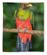 Male Golden-headed Quetzal Fleece Blanket