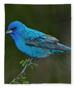 Male Indigo Bunting Fleece Blanket