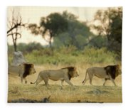 Male Lions At Dawn, Moremi Game Fleece Blanket