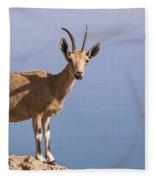 Male Nubian Ibex 1 Fleece Blanket