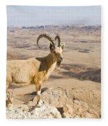 Male Nubian Ibex Capra Ibex Nubiana 1 Fleece Blanket