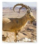 Male Nubian Ibex Capra Ibex Nubiana Fleece Blanket