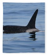 Male Transient Orca In Monterey Bay 11-10-13 Fleece Blanket