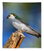 Male Violet-green Swallow Fleece Blanket