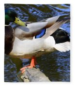 Mallard Drake Fleece Blanket