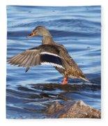 Mallard Duck Showing Off Fleece Blanket