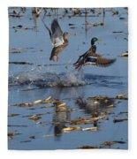 Mallard Pair Takes Flight Fleece Blanket