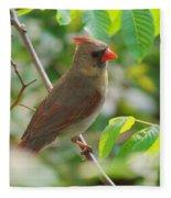 Mama Cardinal Fleece Blanket