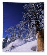 Man Skiing Through Trees In Fresh Fleece Blanket
