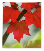 Maple Leaves Show Off Their Autumn Hues Fleece Blanket