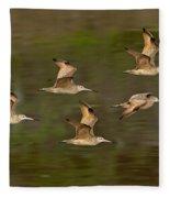 Marbled Godwit Flock Flying Fleece Blanket