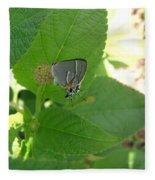 Martial Scrub Hairstreak Butterfly Fleece Blanket
