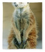 Meerkat Suricata Suricatta Fleece Blanket