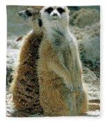 Meerkats Suricata Suricatta Fleece Blanket