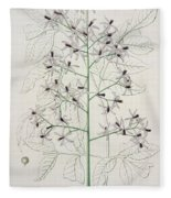 Melia Azedarach From 'phytographie Medicale' By Joseph Roques Fleece Blanket