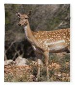 Mesopotamian Fallow Deer 2 Fleece Blanket