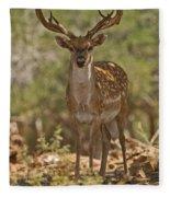 Mesopotamian Fallow Deer 3 Fleece Blanket