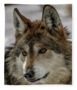 Mexican Grey Wolf Upclose Fleece Blanket