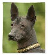 Mexican Hairless Dog Fleece Blanket
