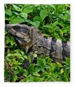 Mexican Spinytailed Iguana  Fleece Blanket