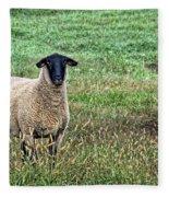 Middle Child - Blackfaced Sheep Fleece Blanket
