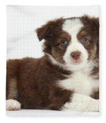 Miniature American Shepherd Puppies Fleece Blanket