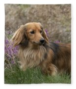 Miniature Long-haired Dachshund Fleece Blanket