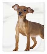Miniature Pinscher Puppy Fleece Blanket