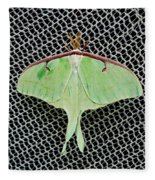 Mint Green Luna Moth Fleece Blanket